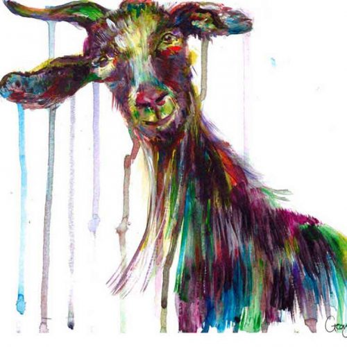 Colourfully painted goat